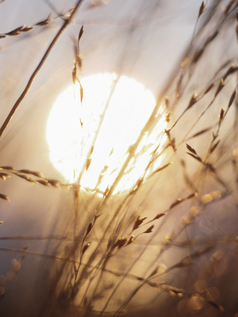 View of Gorgeous Sun Through Fresh Grain Photographic Print