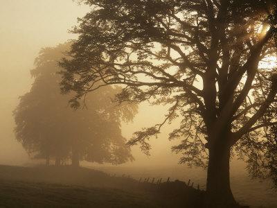 Autumn Morning, Near Dryman, Stirling, Scotland Lámina fotográfica
