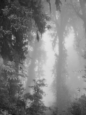 Forest Near Chubitang, at About 2000 Meters Photographic Print