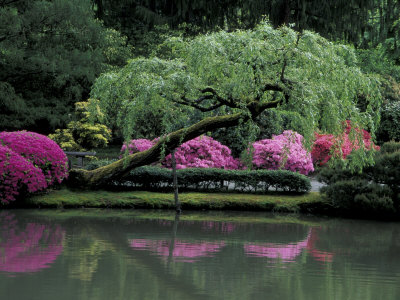 Reflecting pool and Rhododendrons in Japanese Garden, Seattle, Washington, USA Photographic Print