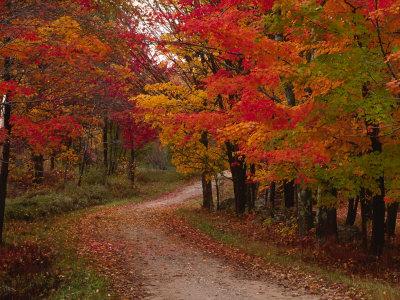 Venkovská cesta na podzim, Vermont, USA Fotografická reprodukce