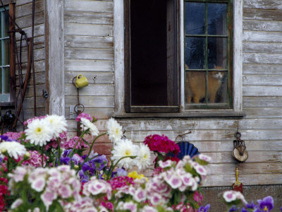 Old Barn with Cat in the Window, Whitman County, Washington, USA Photographic Print by Julie Eggers
