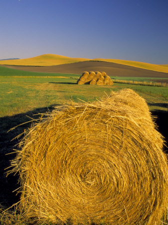 Hay Bales in Field, Palouse, Washington, USA Lámina fotográfica