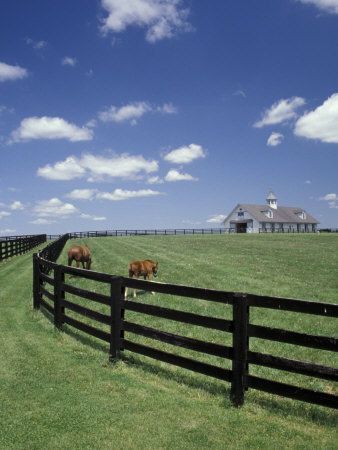 Thoroughbred in the Countryside, Kentucky, USA Photographic Print by Michele Molinari