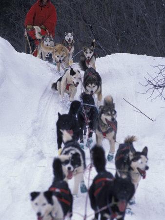 Dog Sled Racing in the 1991 Iditarod Sled Race, Alaska, USA Photographic Print by Paul Souders