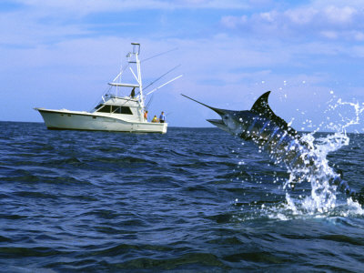Marlin with Fishing Boat in Background Photographic Print