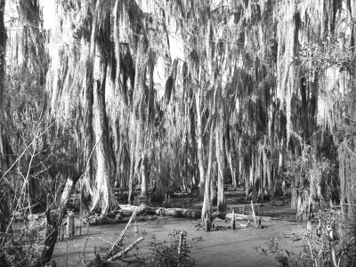 Groves of Oak and Cypress Photographic Print