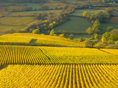 Autumn Morning in Pouilly-Fuisse Vineyards, France Photographic Print by Lisa S. Engelbrecht