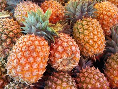Pineapples, Sunshine Coast, Queensland, Australia Photographic Print by David Wall