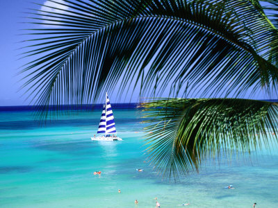 Palm Tree, Swimmers and a Boat at the Beach, Waikiki, U.S.A. Photographic Print