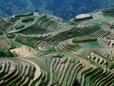 terraces in china. Mountainside Landscape of Rice Terraces, China Photographic Print
