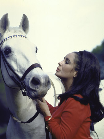 "Actress Elizabeth Taylor with Horse During Filming of ""Reflections in a Golden Eye"" Metal Print by Loomis Dean"