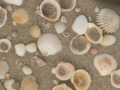 Shells on the Beach, Ko Chang, Thailand Photographic Print by Gavriel Jecan