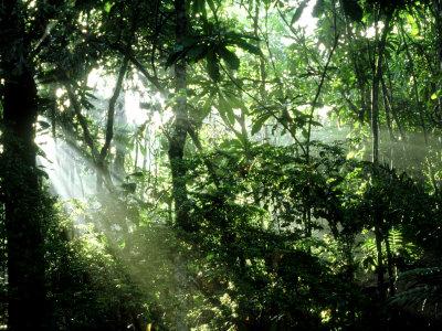 Tropical Rainforest, Panama Photographic Print by John Brown