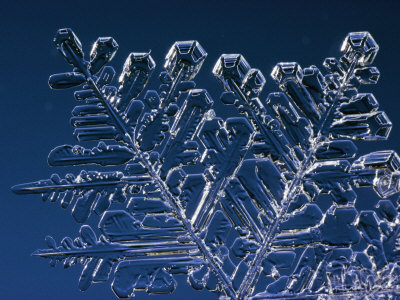 Close up Shot of Part of Snow Crystal Photographic Print by John Dunn/Arctic Light