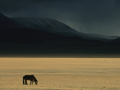 Winter Storm Rolls in over a Horse Grazing on a Mongolian Steppe Photographic Print by David Edwards