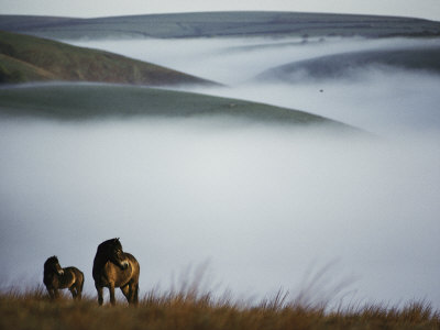 A Pair of Exmoor Ponies on a Fog-Shrouded Moor Photographic Print by Sam Abell