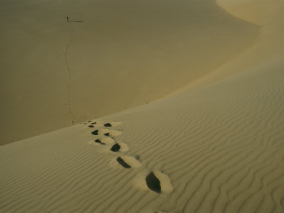 Tracks in the Sand Dunes on Fraser Island Photographic Print by Sam Abell