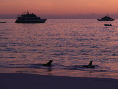 Cruise Ships and Sea Lions, Galapagos Islands Photographic Print