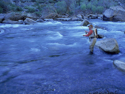 Mature Man Fly-Fishing, West Walker River, CA Photographic Print by Dave Porter