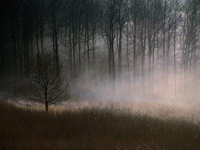 Forest Mist in Rural North West Sjaelland, Sjaelland Island, West Zealand, Denmark Photographic Print by Martin Lladó