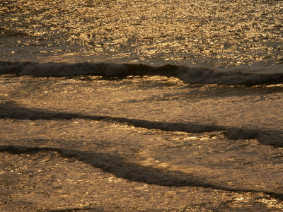 The Golden Surf Crashes on the Olympic Peninsula at Sunset Photographic Print by Sam Abell