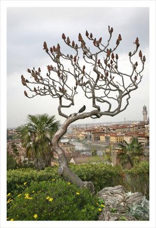 Bird on a Dante Tree, Florence Art by Igor Maloratsky