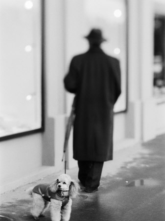 Poodle with Man, Lucerne, Switzerland Photographic Print by Walter Bibikow