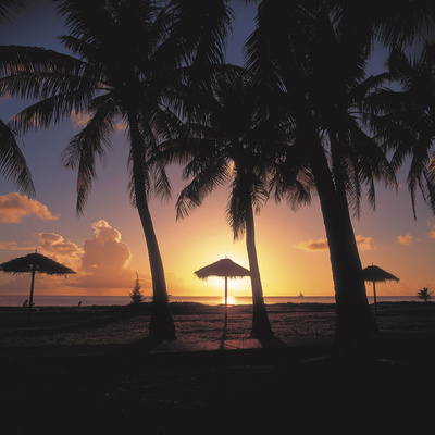 Golden Sunset with Silhouette of Palm Trees and Beach Umbrellas Photographic Print