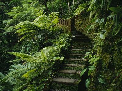 Stone Steps and a Path Cut Through Dense Jungle and Palm Trees ...