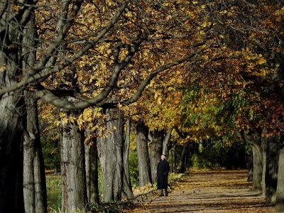 A Man Strolls Through Lazienki Park on a Crisp Autumn Morning in Warsaw, Poland, October 30, 2006 Photographic Print by Czarek Sokolowski