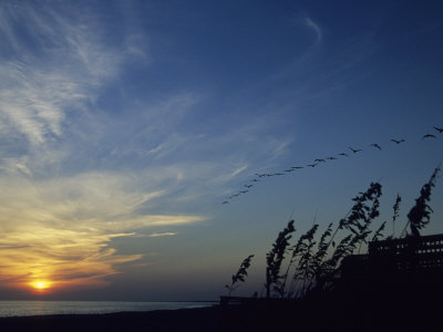 A Flock of Pelicans Soars Above a Beach at Sunset Photographic Print by David Evans