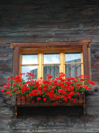 Window Box with Flowers, Zermatt, Switzerland Photographic Print by Lisa S. Engelbrecht