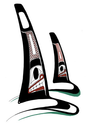 Orcas Collectable Print by Danny Dennis