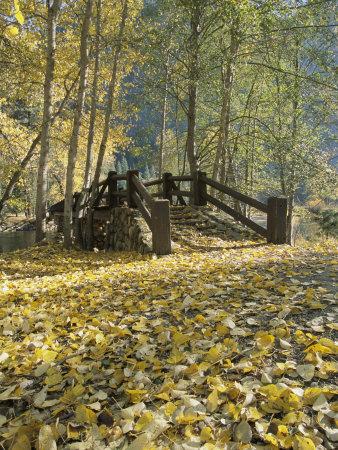 Una pasarela en Sentinel Meadow cubierta por follaje otoñal Lámina fotográfica por Moritsch, Marc