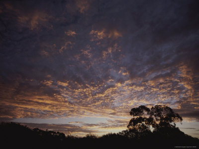 Cloud Formations and Silhouetted Trees at Sunset Photographic Print by Jason Edwards