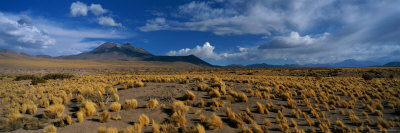 A Wide-Angle View of Altiplano, Chile Photographic Print by Barry Tessman