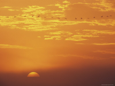 Sunset Sky, Vorpommersche Boddenlandschaft National Park, Germany Photographic Print by Norbert Rosing
