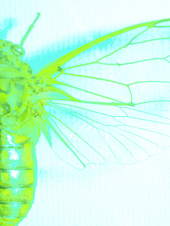 Close-up of Green Insect Body and Wings Photographic Print