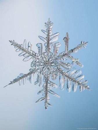Snowflake, Close Up Photographic Print by Edward Kinsman