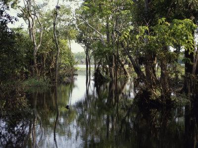 Amazon River, Brazil Photographic Print