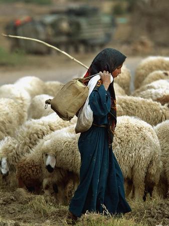 An Iraqi Shepherd, a Young Girl, Herds Her Sheep Photographic Print