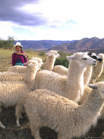 Inca Woman in Costume with Llamas, Cuzco, Peru Photographie