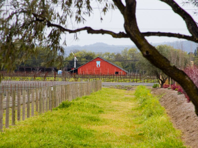 Red Barn near Vineyards, Napa Valley, California, USA Photographic Print by Julie Eggers