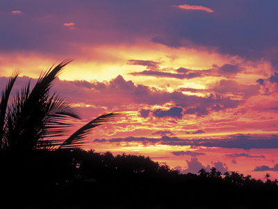Gold and Pink Sunset with Silhouette of Palm Tree Photographic Print