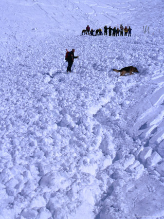 Aftermath of Avalanche with Rescue Party, Dog and Handler Searching for the Missing, Austria Lámina fotográfica por Christian Aslund