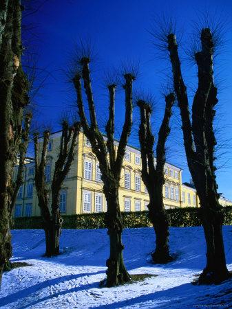 Trees in Winter in Frederiksberg Have, Copenhagen, Denmark Photographic Print by Martin Lladó
