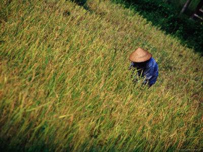 Worker in Field Around Vang Vieng, Vang Vieng, Laos Photographic Print by Ryan Fox