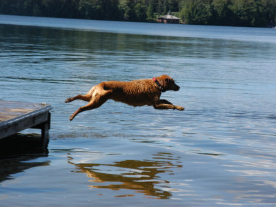 A Dog Jumps into a Lake Chasing a Ball Photographic Print
