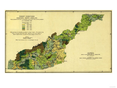 Forests of Western North Carolina - Panoramic Map Posters by  Lantern Press